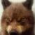 :iconricanwolf: