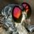 :iconrobberfly-warren: