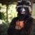 :iconrocket-raccoon1: