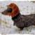 :iconrocketdog2015: