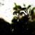 :iconrockin-oxs: