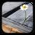 :iconrolly01: