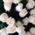:iconrosey-petals: