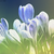 :icons-avour: