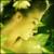 :icons-sasuke: