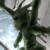 :iconsaurus: