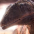 :iconsaurus1014: