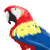 :iconscarlet-macaw:
