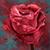 :iconscarletwarmth: