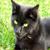 :iconscaryblackcat: