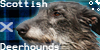 :iconscottish-deerhounds: