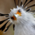 :iconsecretary-bird:
