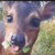 :iconservicedogssupporter: