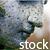 :iconseventhsealstock: