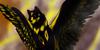 :iconshadowthewolffanclub: