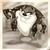 :iconshadowwolf-taz: