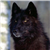 :iconshewolf1992: