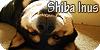 :iconshiba-inus: