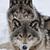 :iconshilohwolf33: