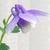 :iconshin311: