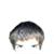 :iconshogran07: