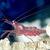 :iconshrimpishshrimp11: