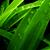 :iconsimplex21: