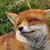 :iconsir-foxalot: