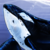 :iconsky-whales: