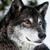 :iconslywolfen: