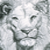 :iconsmintz-candy: