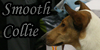 :iconsmoothcollie: