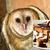 :iconsmore-toast-owl: