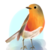 :iconsnewderp: