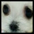:iconsnowythepup: