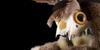 :iconsnuff-stuffie-realm: