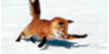 :iconsoft-mount-taxidermy: