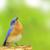 :iconsongbird1567: