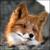:iconsora364: