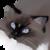 :iconsparrowfur1: