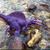 :iconspinosaurusqueen: