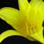 :iconspiralout1123211: