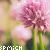 :iconspmich: