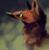 :iconspookeleopard: