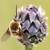 :iconspotting-nature: