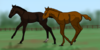 :iconspringvalleystables: