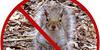 :iconsquirrel-patrol: