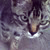 :iconss1146fzzy: