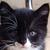 :iconstalker-kitty: