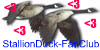 :iconstallionduck-fanclub:
